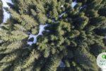 Un stadion de la EURO 2008 din Austria a fost transformat temporar într-o pădure, cu ocazia unei expoziții